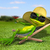 frog in a deck chair on the grass stock photo © brux
