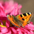 borboleta · flor · grande · branco · vermelho · natureza - foto stock © brux