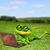 зеленый · лягушка · увеличительного · 3d · иллюстрации · веселый · улыбка - Сток-фото © brux