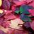 ősz · Virginia · levelek · háttér · narancs · zöld - stock fotó © bsani