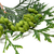 abete · rosso · ramoscello · dettaglio · verde · immagini · lato - foto d'archivio © bsani