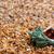 wet seashell on sand stock photo © bsani