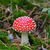 fly agaric amanita muscaria in forest stock photo © bsani