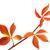 három · piros · ősz · Virginia · levelek · fehér - stock fotó © bsani