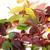 automne · Virginie · feuille · feuillage · isolé · blanche - photo stock © bsani