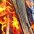 şenlik · ateşi · orman · bahar · yangın · Ukrayna · ahşap - stok fotoğraf © bsani