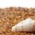 улитки · природы · листьев · алоэ · саду · лет - Сток-фото © bsani