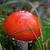 toxique · champignons · photos · nature · feuille - photo stock © bsani
