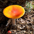 amanita muscaria mushrooms in dark forest stock photo © bsani