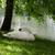 ミュート · 白鳥 · 林間の空き地 · ツリー · 自然 · 美 - ストックフォト © bsani