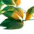 vert · rouge · laisse · Virginie · isolé · blanche - photo stock © bsani