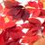 piros · ősz · Virginia · levelek · izolált · fehér - stock fotó © bsani