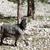goat at sun day stock photo © bsani