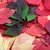 vert · rouge · automne · Virginie · isolé · blanche - photo stock © bsani