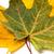 iki · kuru · turuncu · yeşil · yalıtılmış · beyaz - stok fotoğraf © bsani
