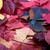 sonbahar · Virjinya · yaprakları · arka · plan · turuncu · yeşil - stok fotoğraf © bsani