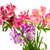 Bouquet of lilies (alstroemeria) stock photo © BSANI
