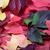 kırmızı · sonbahar · yeşil · Virjinya · yaprakları · beyaz - stok fotoğraf © bsani