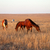 horses grazing in pasture stock photo © bsani