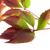 sonbahar · dal · üzüm · yaprakları · yeşillik · yalıtılmış - stok fotoğraf © bsani