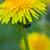 カブトムシ · 黄色の花 · 赤 · ベルベット · 黄色 - ストックフォト © bsani