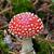 champignon · Rood · witte · vliegen · natuur · bos - stockfoto © bsani
