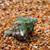 wet seashell on sand in sunny day stock photo © bsani