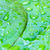 green leaf with water drops close up stock photo © bunwit