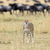 afrikai · portré · gyönyörű · állat · afrika · macska - stock fotó © byrdyak