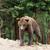 男性 · ヒグマ · 肖像 · 頭 · 動物園 - ストックフォト © byrdyak