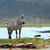 hermosa · África · Kenia · primavera · gato - foto stock © byrdyak