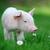 leitão · primavera · grama · verde · fazenda · comida · bebê - foto stock © byrdyak