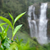 tea · ültetvény · tájkép · Föld · hegy · nyár - stock fotó © byrdyak