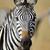 シマウマ · 肖像 · クローズアップ · 赤ちゃん · アフリカ · 環境 - ストックフォト © byrdyak