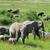 elephant stock photo © byrdyak