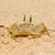 краба · песчаный · пляж · дыра · пляж · солнце · природы - Сток-фото © byrdyak