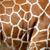 zürafa · cilt · doku · gerçek · deri · ışık - stok fotoğraf © byrdyak