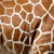 Giraffe skin texture stock photo © byrdyak