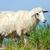 羊 · 雲 · 曇った · 青空 · 空 - ストックフォト © byrdyak