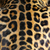 Leopard · Jaguar · pattern · abstract · nero · pelle - foto d'archivio © byrdyak