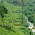 chá · plantação · Sri · Lanka · natureza · fundo - foto stock © byrdyak