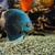 subaquatique · scène · bulles · mer - photo stock © byrdyak