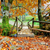 őszi · levelek · tavacska · fedett · zöld · vízi · növények - stock fotó © byrdyak