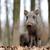 vad · vaddisznó · fut · erdő · fák · tél - stock fotó © byrdyak