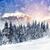 inverno · paisagem · belo · neve · coberto · árvores - foto stock © byrdyak