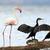 rózsaszín · flamingó · víz · trópusi · díszlet · magas - stock fotó © byrdyak