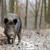 javali · outono · floresta · primavera · porco - foto stock © byrdyak