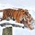 vad · tigris · dzsungel · közelkép - stock fotó © byrdyak