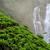 ağaç · Sri · Lanka · orman · arka · plan · güzellik · kuş - stok fotoğraf © byrdyak