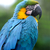 parrot bird severe macaw stock photo © byrdyak